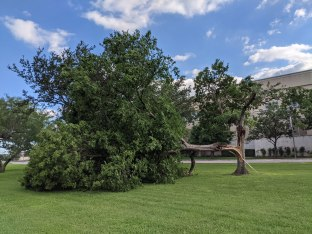 Tree broken from the last night's storm, May 29, 2021