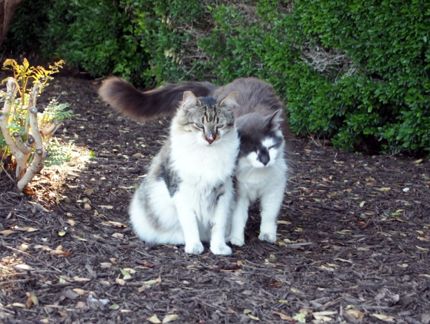Rocky & Charlie, May 9, 2021