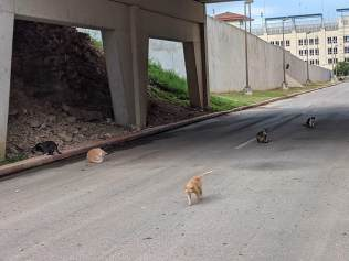 BB Kitties, June 27, 2021