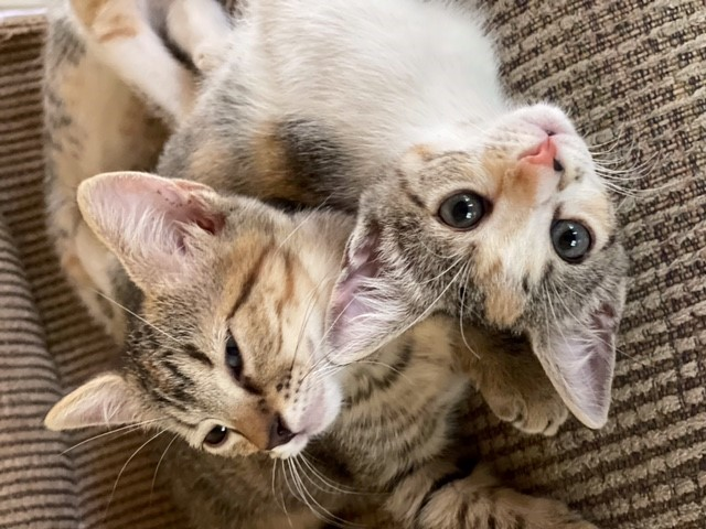 Hobbs' kittens, July 25, 2021