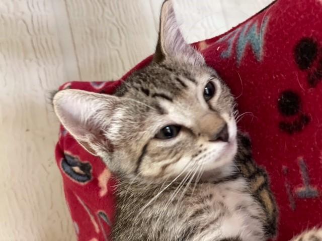 Hobbs' kitten, July 25, 2021