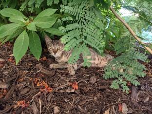 New kitten, September 16, 2021